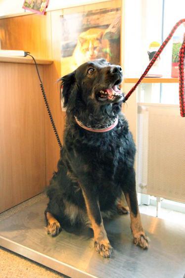 (hund-auf-tierarztwaage-IMG_0254.jpg)