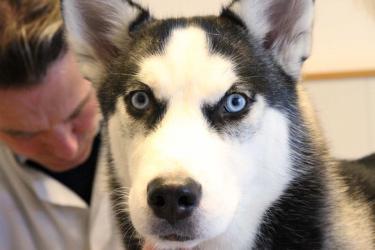 (husky-beim-tierarztIMG_0350.jpg)