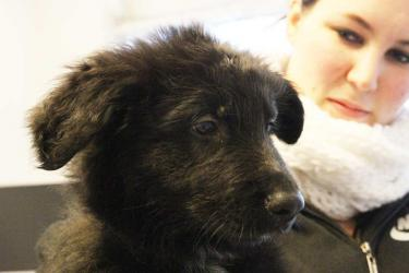 (schaeferhund-beim-tierarztIMG_0439.jpg)